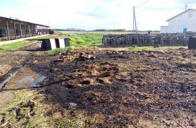 КГК выявил недостатки в подготовке животноводческих ферм к зиме